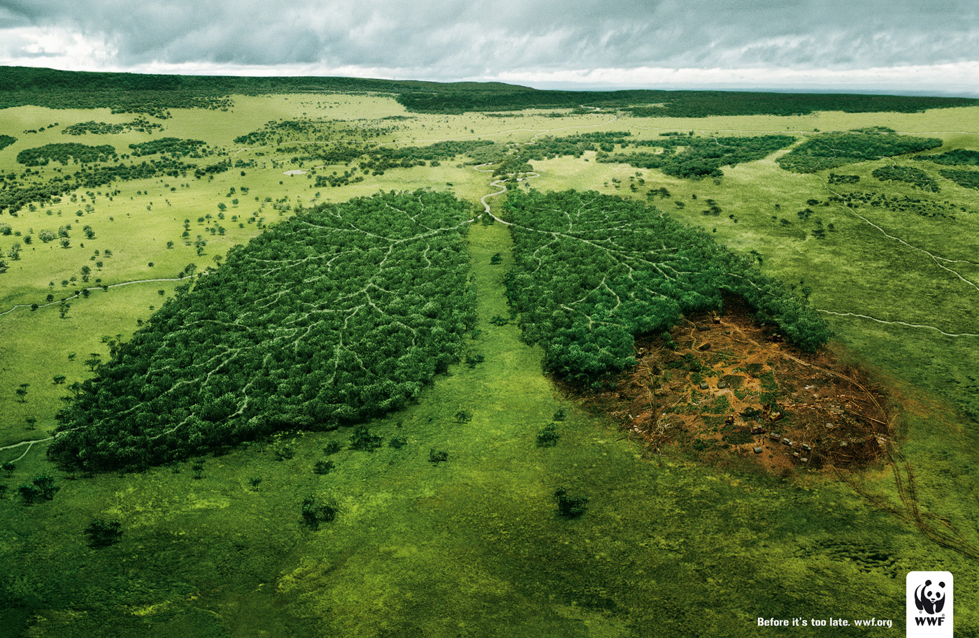 trees are the lungs of the earth breathing spaces trees are the lungs of the earth