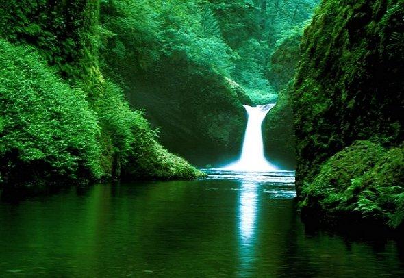 Amazon Rainforest South America_4