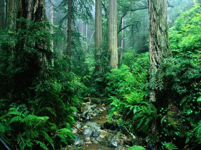 (South America) - Amazon