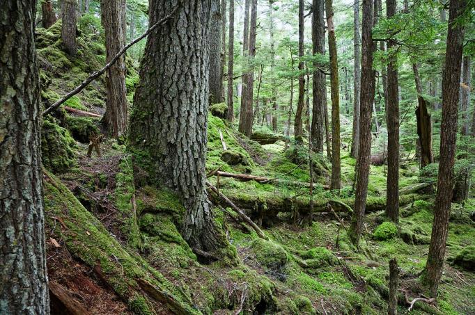 coniferous-forest-inside-passage-konrad-wothe